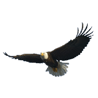 Download Eagle Free PNG photo images and clipart.