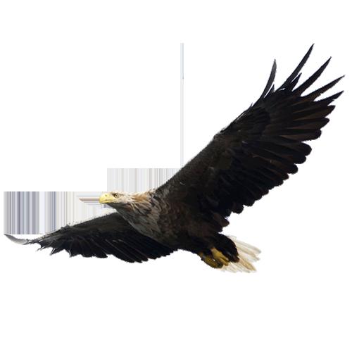 Eagle PNG Image.