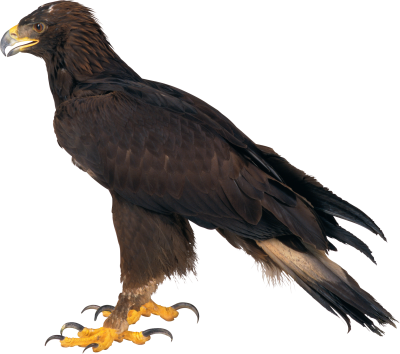 Download EAGLE Free PNG transparent image and clipart.