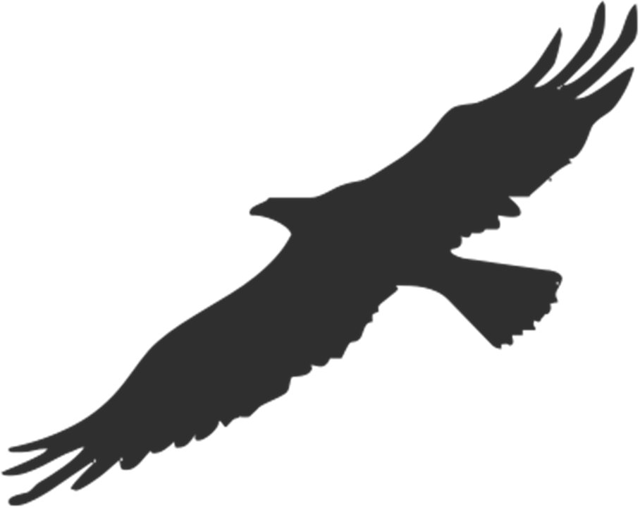 Eagle Bird Silhouette.