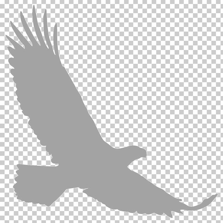 Bald Eagle Silhouette PNG, Clipart, Accipitriformes, Animal, Animals.