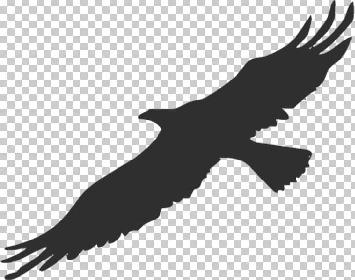 Bird Bald Eagle Silhouette PNG, Clipart, Accipitriformes, American.
