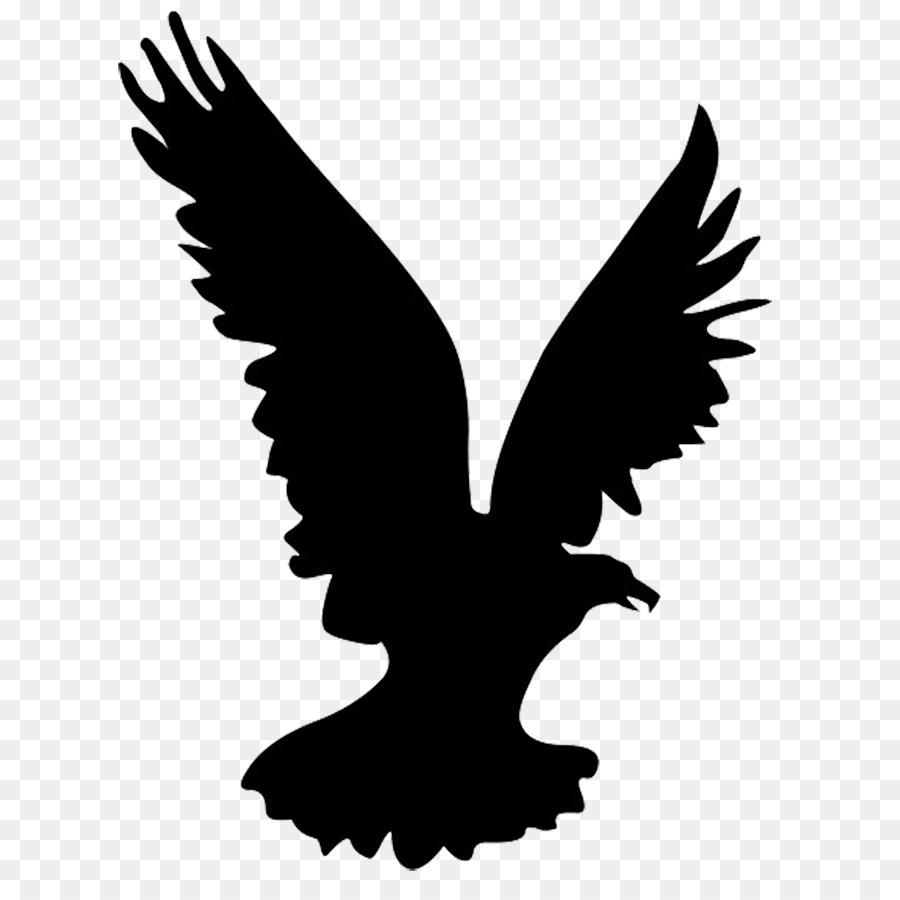 Eagle Drawing png download.