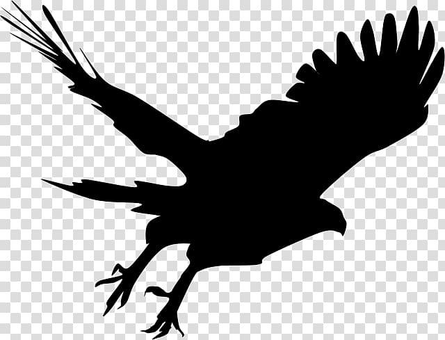 Bald Eagle Silhouette Hawk , Silhouette transparent background PNG.