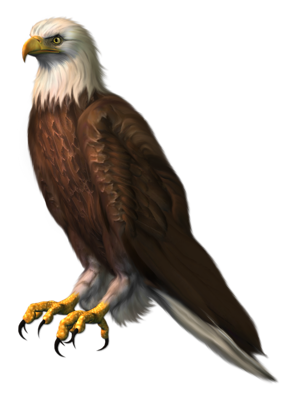 Eagle Transparent PNG Clipart Picture.