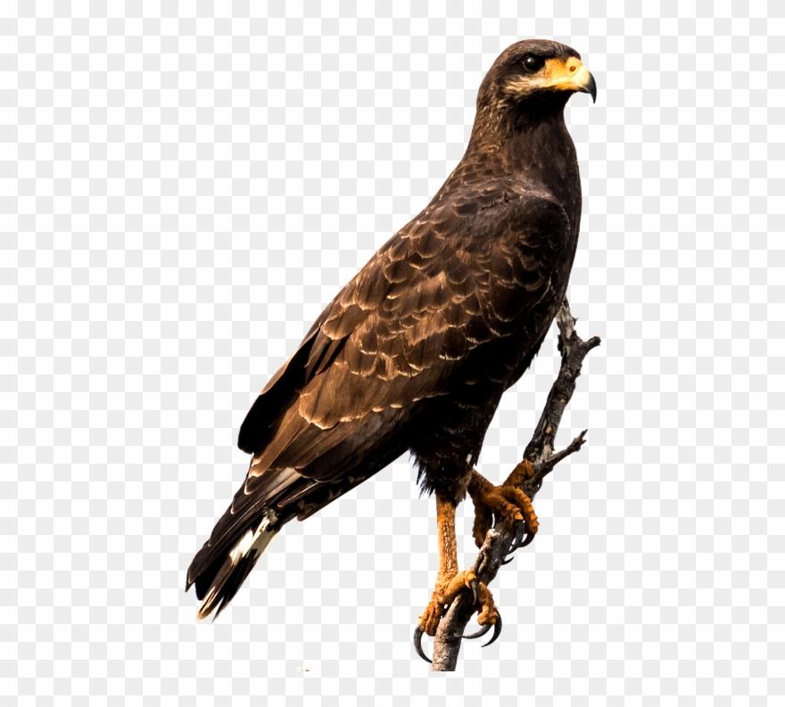 Raptor Bird Png.