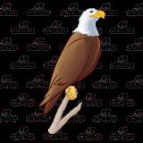 Bald Eagle, sitting.