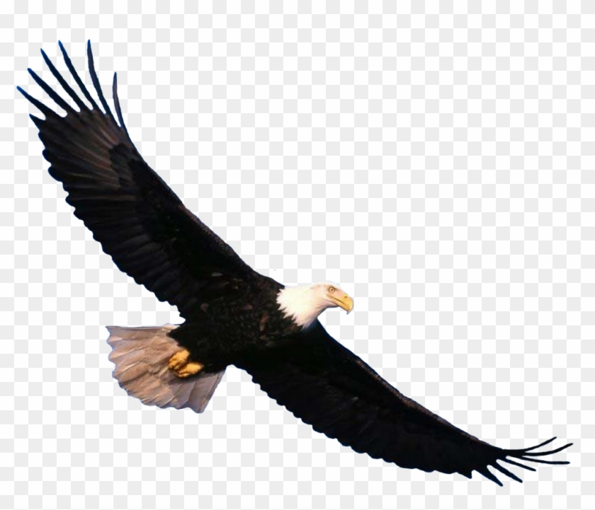 Eagle Png Image, Free Download.
