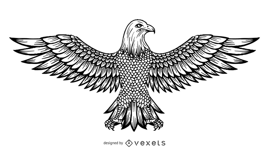Vector Line Drawing Of The Eagle.