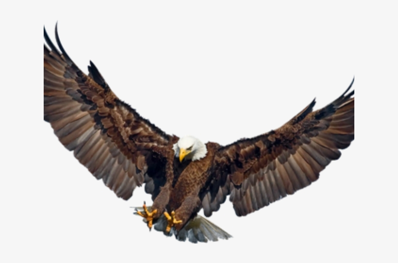 Download Free png Drawn Falcon Eagle Wings Spread Eagle Spreading.