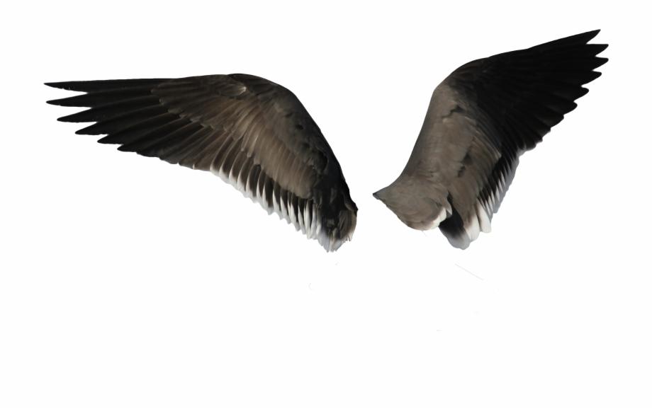 Black Wings.
