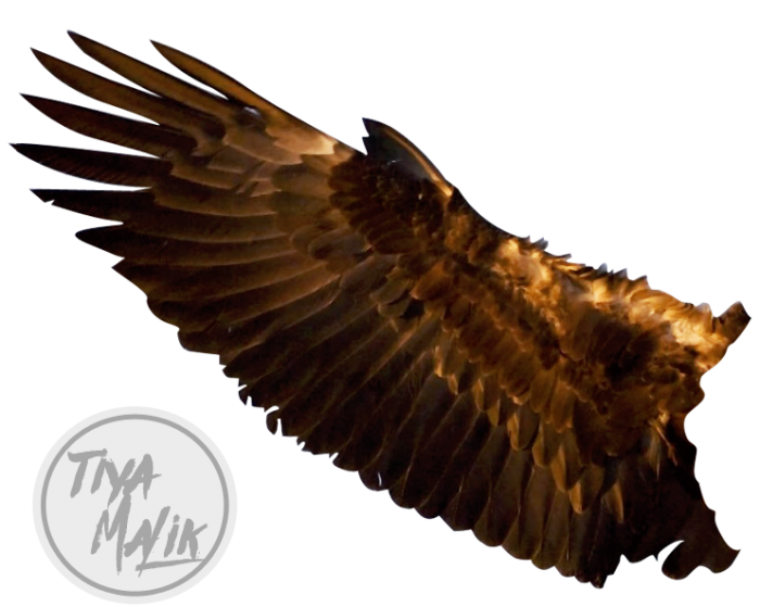 Eagle Wings Png Vector, Clipart, PSD.