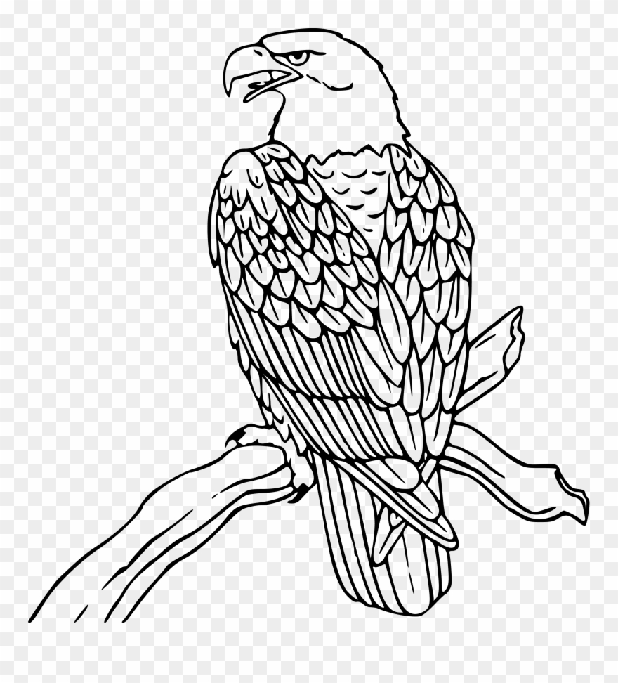 Clipart Free Download Free Eagle Clipart Eagles.