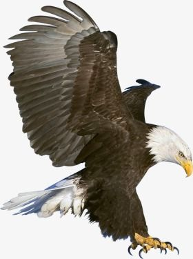 Eagle, Eagle Clipart, Bird PNG Transparent Image and Clipart for.