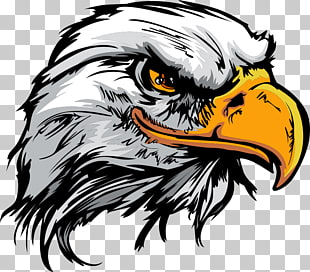 6,611 eagles PNG cliparts for free download.