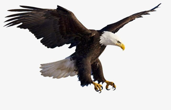 Flying Eagles PNG, Clipart, Animal, Eagle, Eagles Clipart, Fly.