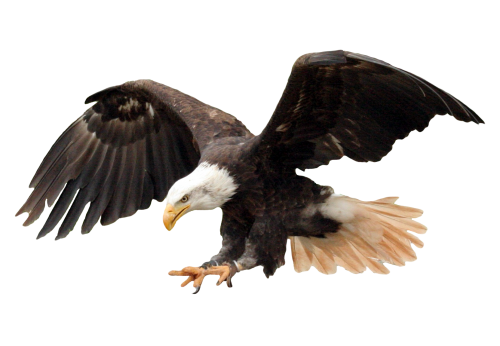 Eagles png clipart images gallery for free download.