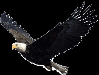 Flying Eagle transparent PNG.