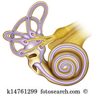Ear canal Illustrations and Clip Art. 293 ear canal royalty free.