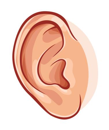 Human ear clipart.