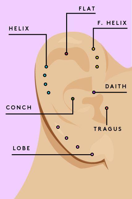 Ear lobe mushroom clipart  Clipground