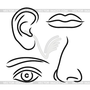 ear, mouth and eye.