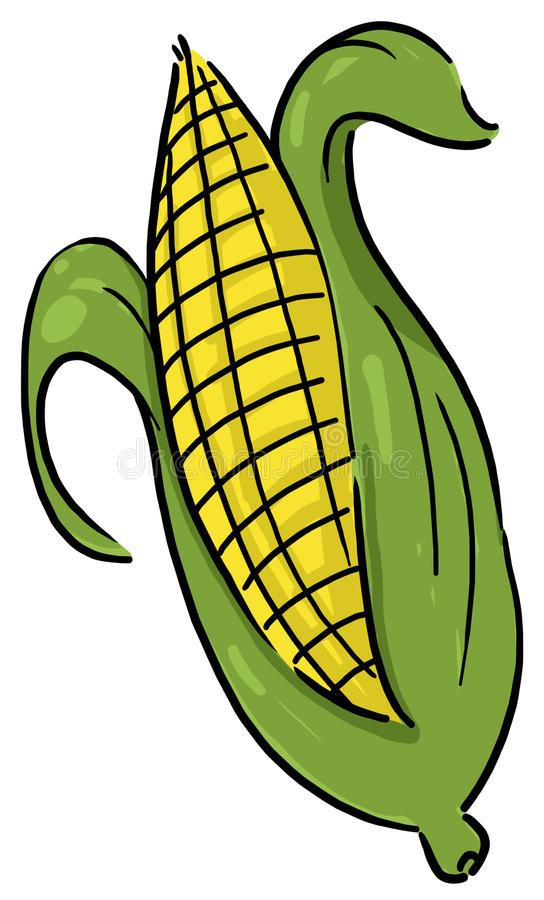 Ear Corn Stock Illustrations.