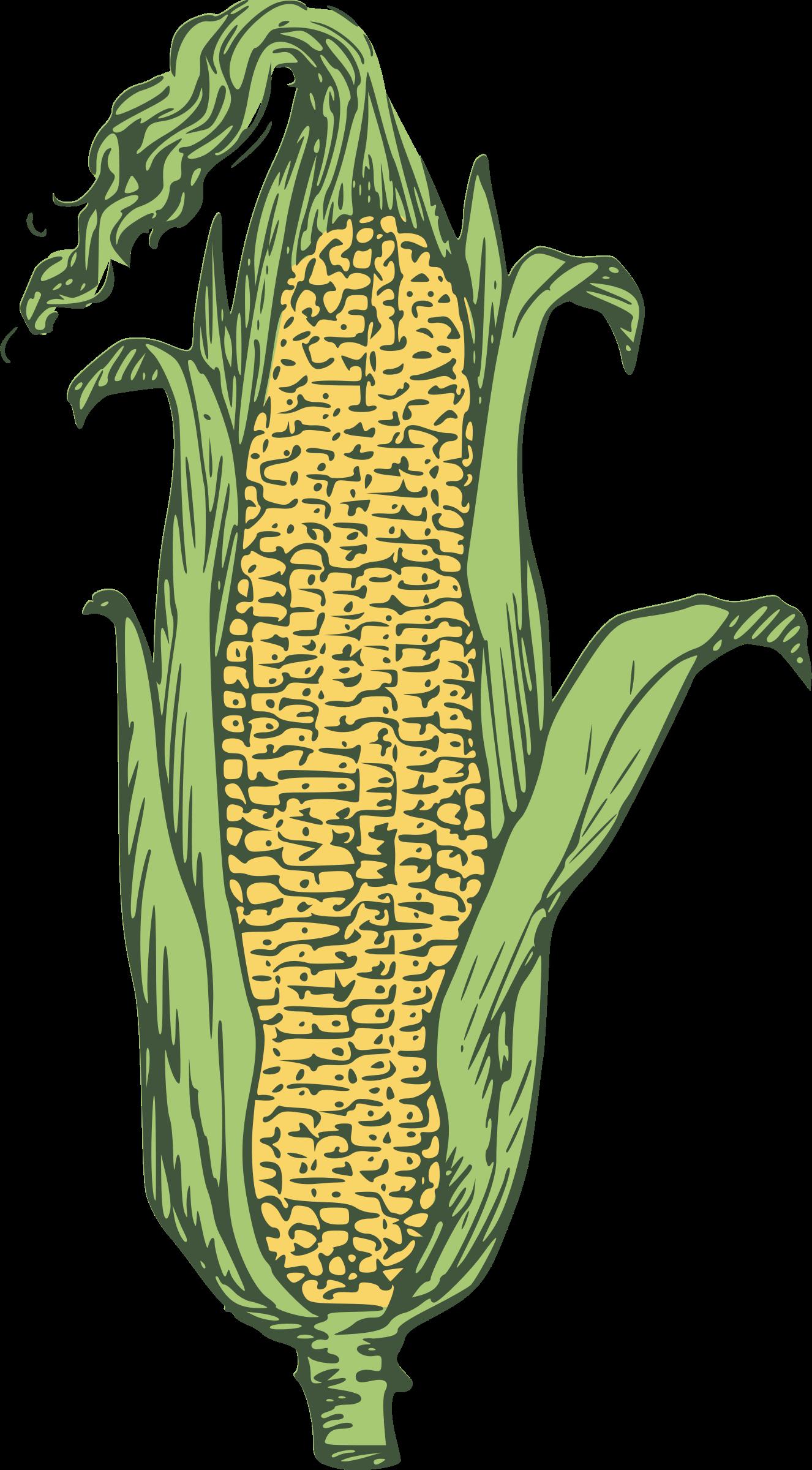 Ear of corn clipart 3.