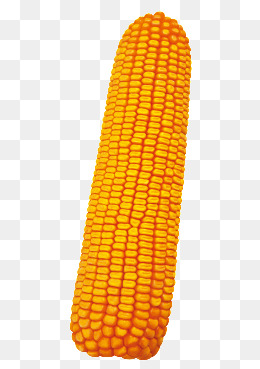 Ear Of Corn Clipart Png, Vector, PSD, and Clipart With Transparent.