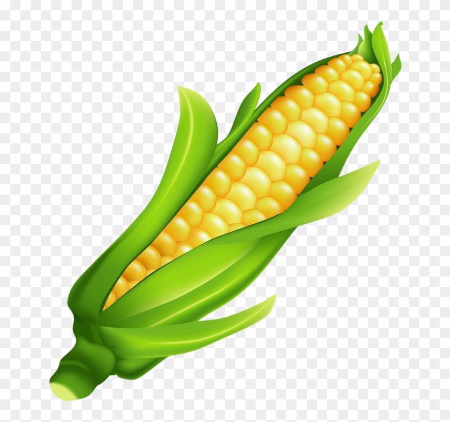 Milho Ear Of Corn Ears Of Corn, Food Clipart, Fruits.