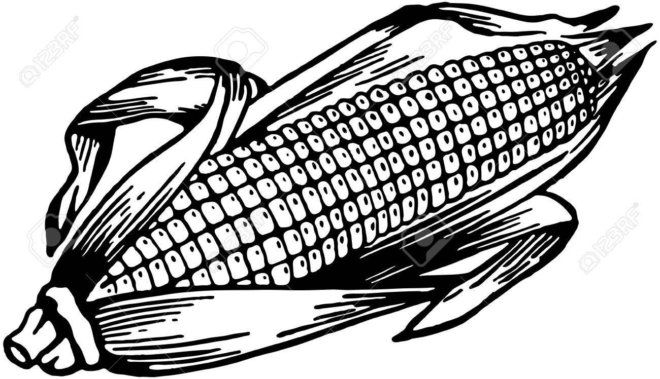 Ear Of Corn.