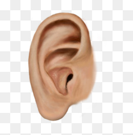 Big Ears Png & Free Big Ears.png Transparent Images #11129.