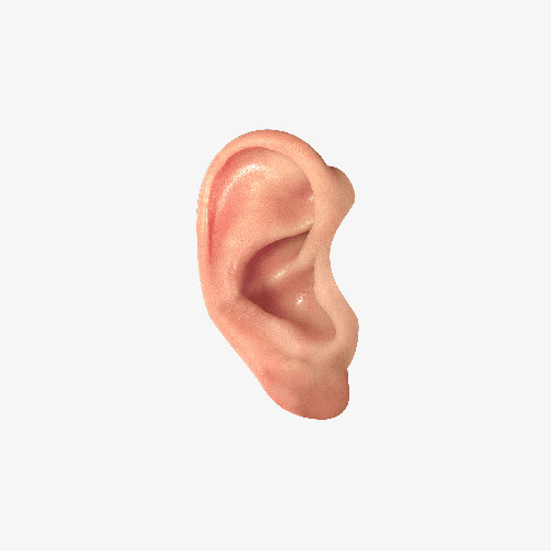 Do Not Pull Out The Ear, Ear Clipart, Ea #236036.