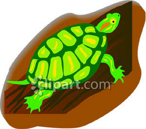 Red eared slider turtle clipart.
