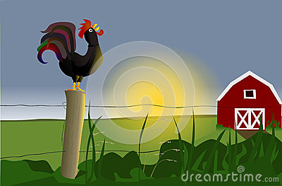 Breakfast Rooster Sunrise Royalty Free Stock Photos.