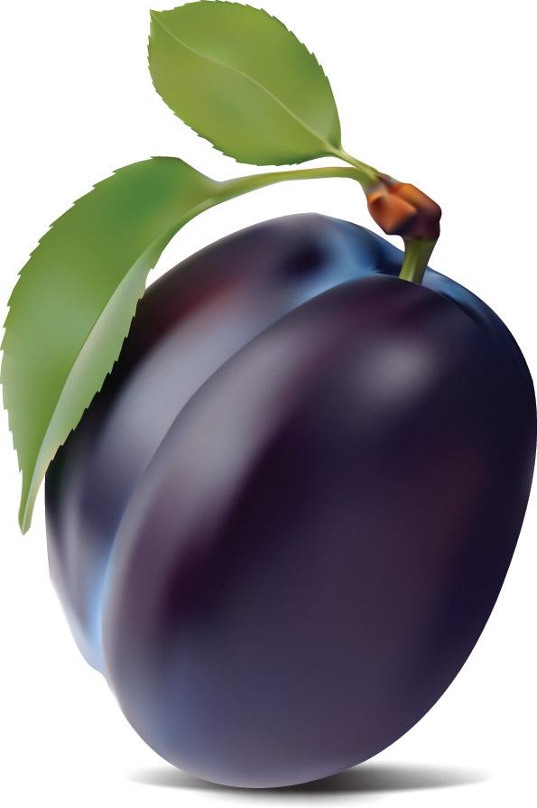 Purple plum vector Free Vector / 4Vector.