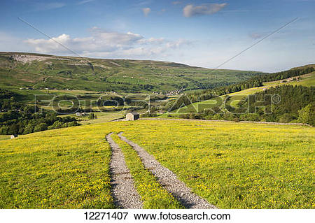 Picture of Farm track across a dales hay meadow in early summer.