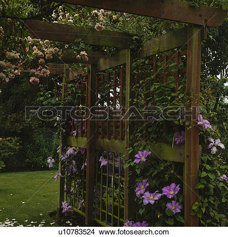 Stock Photo of Shady pergola with early summer pairing of an.
