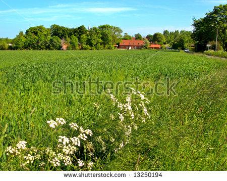 Farm Land Thenkashi Tamilnaduindia Stock Photo 294176348.