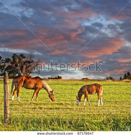 Pasture Fence Stock Photos, Royalty.