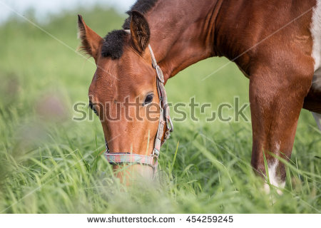 Horse Pasture Stock Photos, Royalty.