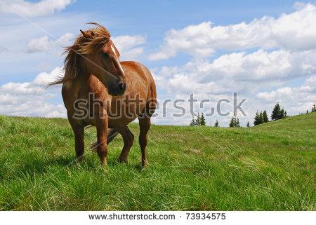 Horse Pasture Stock Photos, Royalty.