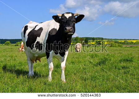 Pasture Stock Images, Royalty.