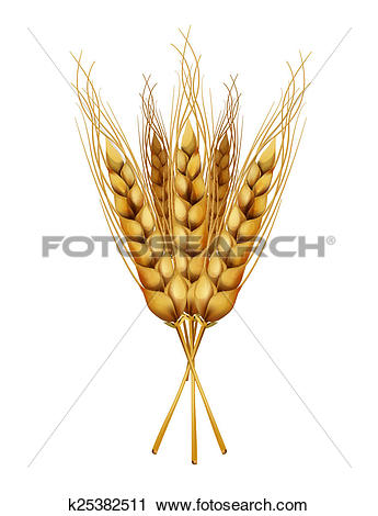 Clipart of Ears of wheat For bread packaging, beer labels etc.
