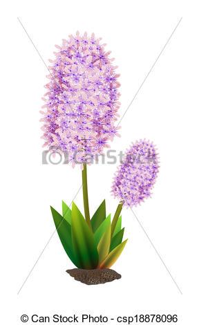 Stock Illustration of hyacinth.