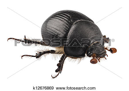 Earth-boring dung beetles clipart #20