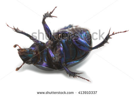 Earth Boring Dung Beetle Stock Photos, Images, & Pictures.