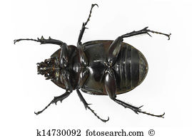 Earth-boring dung beetles clipart #12