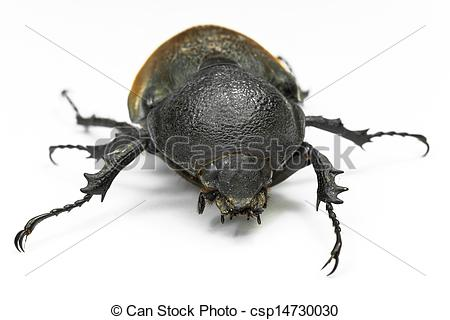 Earth-boring dung beetles clipart #17