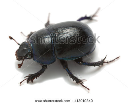 Earth-boring dung beetles clipart #13